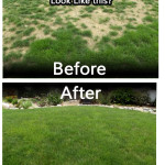 Lawn before and after organic lawn service