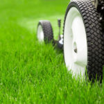 when to stop mowing